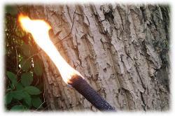 brennendefackel.jpg