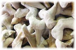 fossilehaifischzaehnenah.jpg
