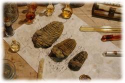 trilobitengroessenvergleich2.jpg