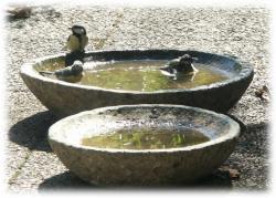 vogeltraenke2.jpg