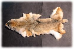 coyotenfelleinzelstuecka.jpg