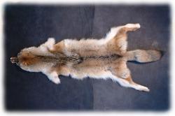 coyotenfelleinzelstuecke.jpg