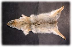 coyotenfelleinzelstueckg.jpg