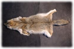 coyotenfelleinzelstueckh.jpg