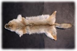 coyotenfelleinzelstuecki.jpg