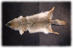 coyotenfelleinzelstueckk.jpg