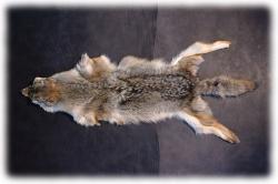 coyotenfelleinzelstueckm.jpg