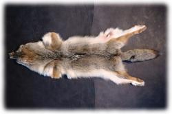 coyotenfelleinzelstueckn.jpg