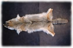 coyotenfelleinzelstuecko.jpg