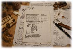 a5geschoepftespapierschriftprobekraeuterbuch.jpg